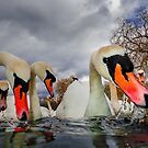 Swan Lake by Patricia Jacobs DPAGB BPE4