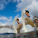 Three Swans by Patricia Jacobs DPAGB BPE4