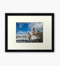 Three Swans Framed Print