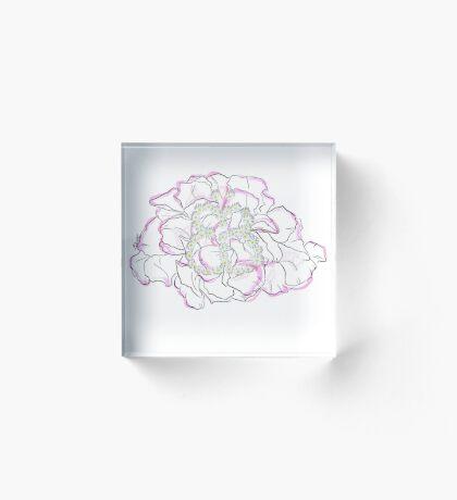 Schmetterlingsblume Acrylblock