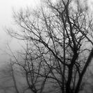 Misty by NervousNellie
