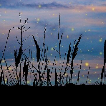 deep blue twilight marsh by chihuahuashower