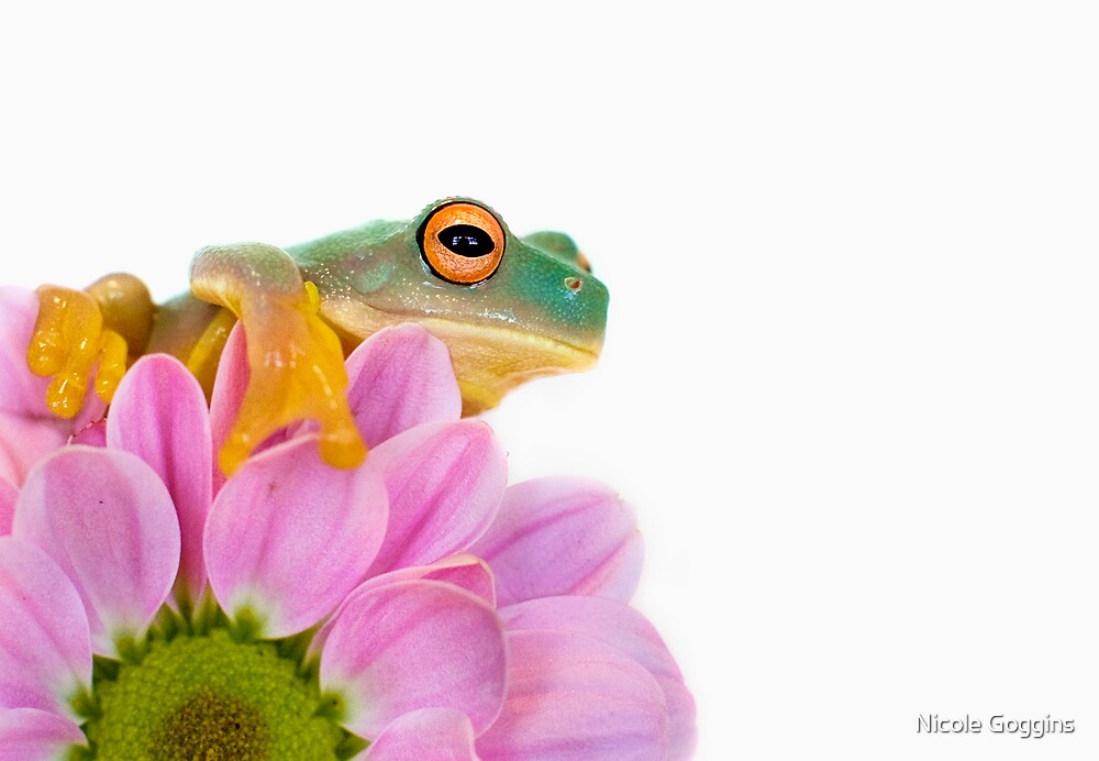 Little Frog... by Nicole Goggins