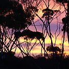 Mallee Sunset by adbetron