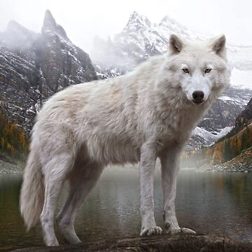 Wolf by Cliff