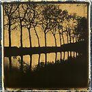 Trees Along The River von MaruanDotCom