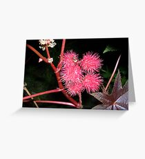 Red spine fruit Greeting Card