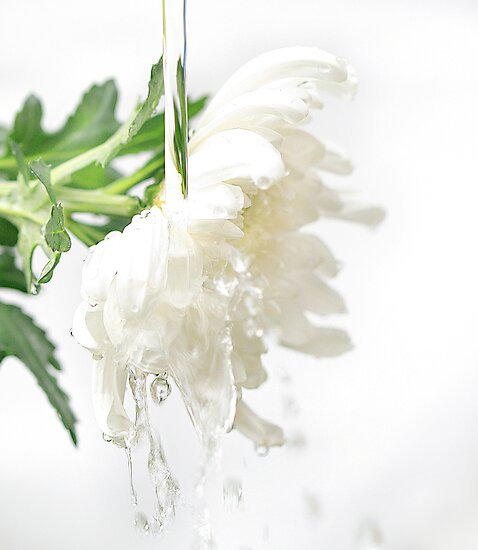 White water flower by micklyn