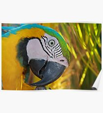 A Bird in Paradise Poster