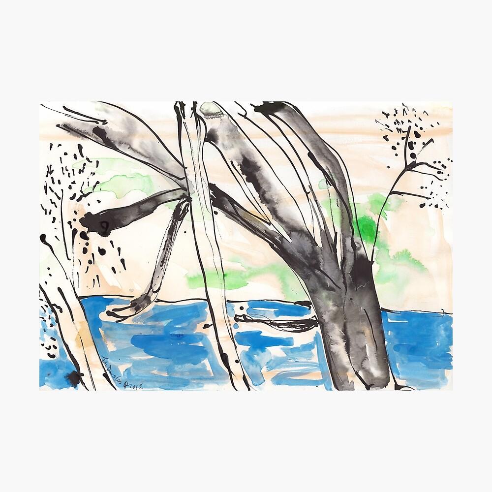 Ross River Rain Tree Photographic Print