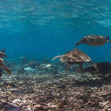 Sea turtle party by KaraMurphy