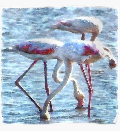 Flamingos Eating Watercolor Poster