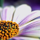 Flower close-up by Anteia