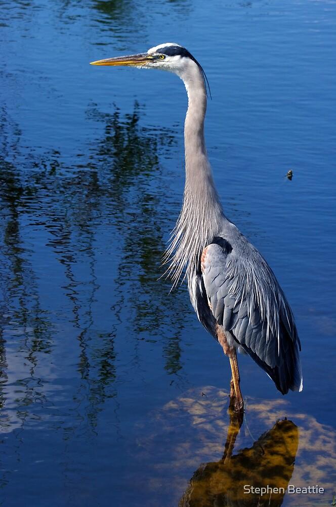 Great Blue Heron - The Whole Bird by Stephen Beattie