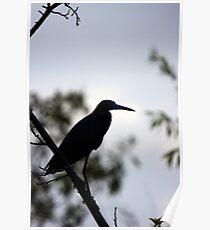 Little Blue Heron - Silhouette Poster
