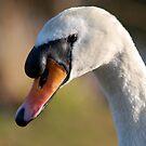 swan. ruswarp.  by dougie1