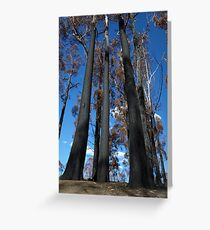Black Knights of the Jindivick Forest Greeting Card