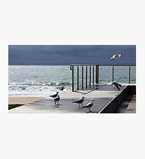 the light!  at Burnie beach, with silver gulls Photographic Print