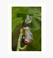 How Glasswings are made.............. Art Print