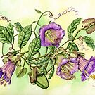Cathedral Bell, Cobaea scandens (watercolour on paper) by Lynne Henderson
