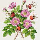 Shrub rose, Rosa rugosa (watercolour on paper) by Lynne Henderson