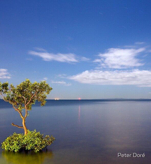 Moonlit Mangrove by Peter Doré