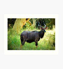 Kudu, Malawi Art Print