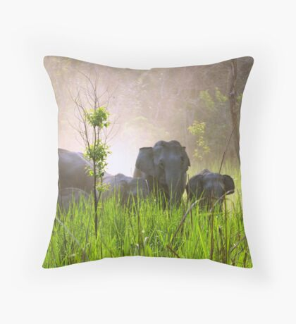Wild elephant herd, Manas National Park, Assam, India Throw Pillow