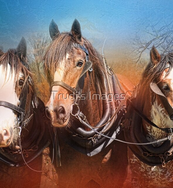 Three by Trudi's Images