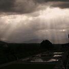 Rays of Light by Terri~Lynn Bealle