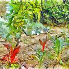 Vegetable garden by Giuseppe Cocco
