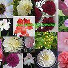 All About Flowers by pat oubridge