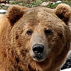 Brutus the Grizzly Film Star by AnnDixon