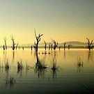 Golden Ducks  by cjcphotography