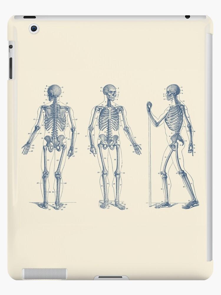 Excepcional Diagrama Esquelético Ornamento - Anatomía de Las ...
