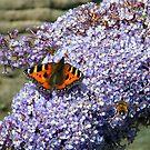 Butterfly2# by Alexander Mcrobbie-Munro