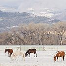 Beautiful Horses Geese and Snow by Bo Insogna
