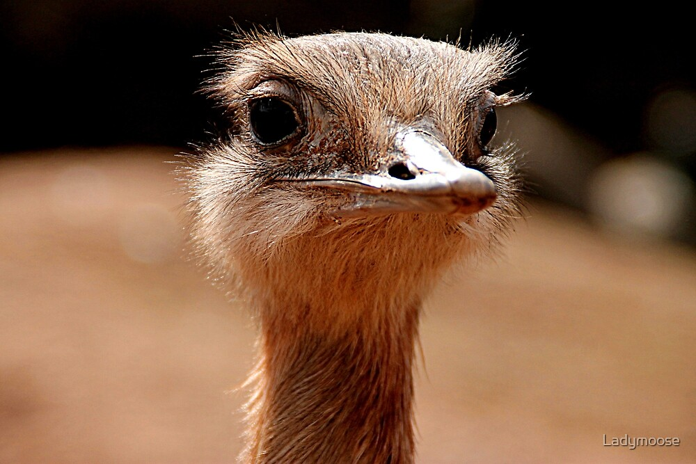 If Only Emu by Ladymoose
