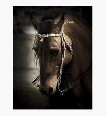 Horse Art Photographic Print
