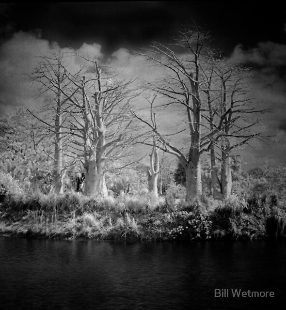 Baobab Lake by Bill Wetmore
