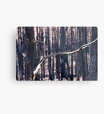 Forest Destruction. Metal Print