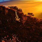 Sunset at 9300 Feet by Ran Richards