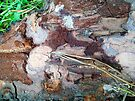 Remains of the Pine Tree by elee