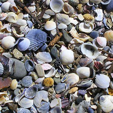 Sea Shells on Burleigh Heads Beach Queensland  by ginnymac