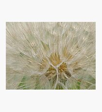 Texture of Seeds. Photographic Print