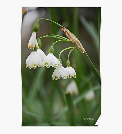 Lilly of the Valley Poster