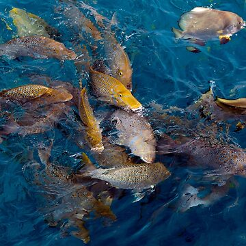 Tropical fish feeding near the surface,  Michaelmas Cay, The Great Barrier Reef by JohnGaffen