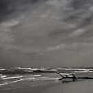The sea, The trunk, The sky by Chamika Amarasiri