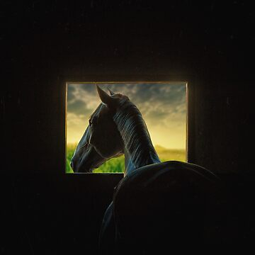 Horse in the window by leandrojsj