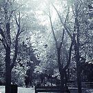 soleil du midi _v2 by Aimelle